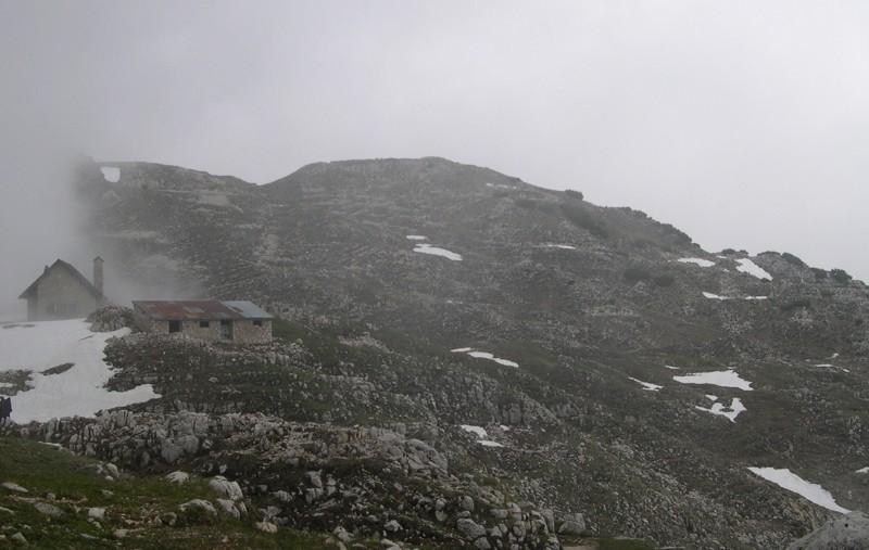 Lycia alpina