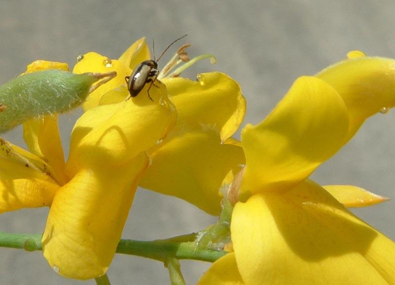 Altri insettini
