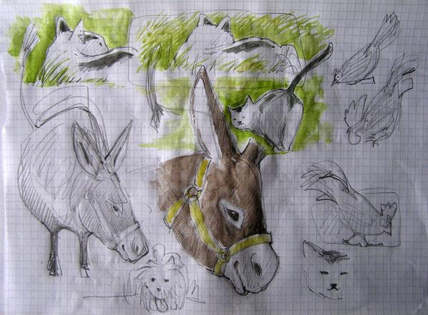 corso di disegno naturalistico 11° lezione