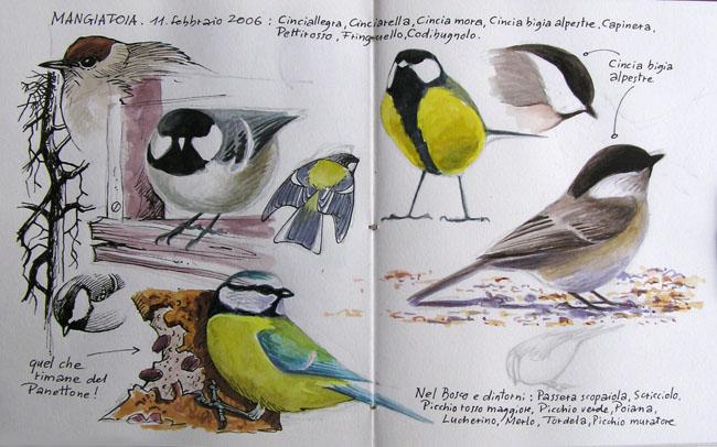 Disegni di uccelli in mangiatoia forum natura - Semplici disegni di uccelli ...