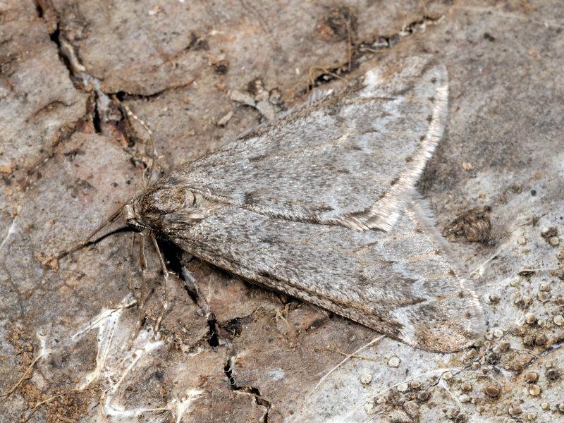 Ancora farfalle invernali