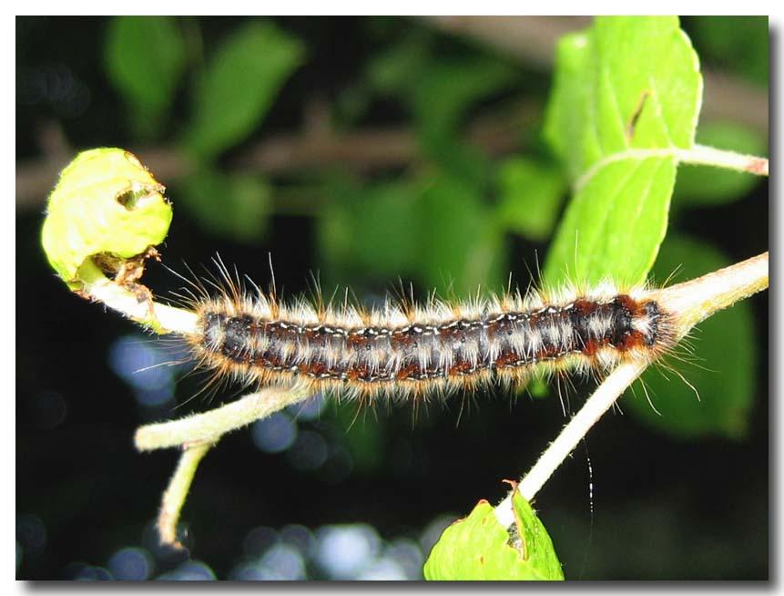 dal raduno del forum insetti 2a parte - lepidotteri