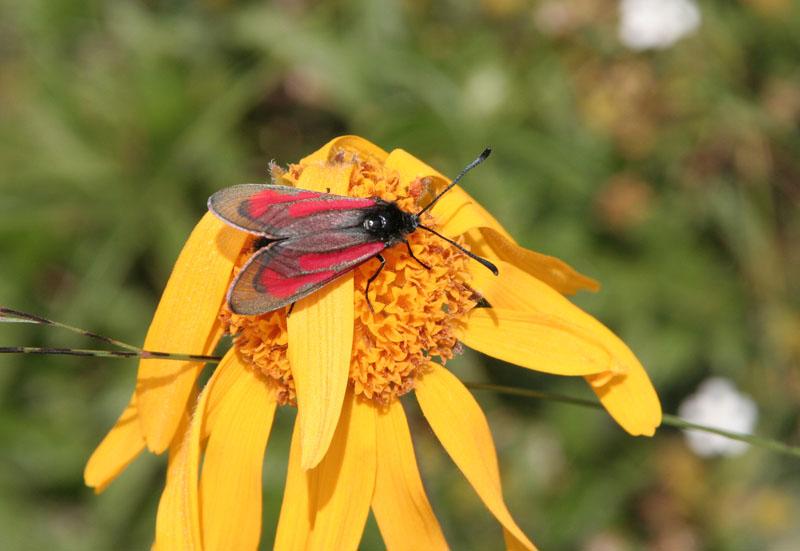 Alcune farfalle da determinare