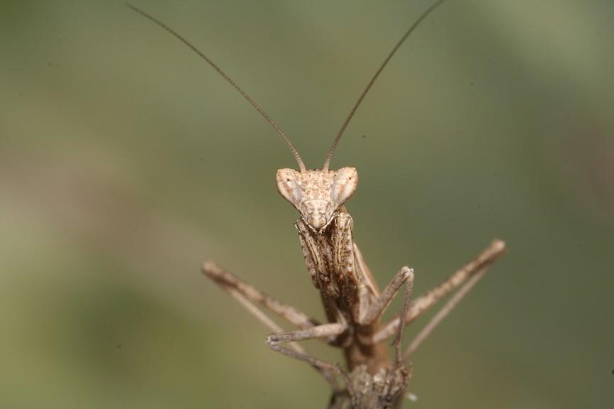 Qualche insetto dalle vacanze
