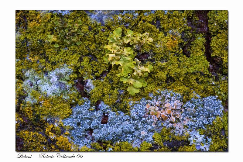 Pianeta Terra Licheni_2006-10-22-21.jpg_20061024213624_Licheni_2006-10-22-21