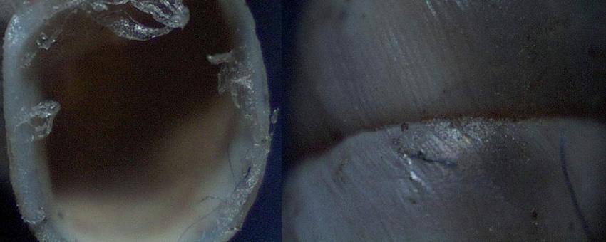 Solatopupa pallida (Rossmässler, 1842)
