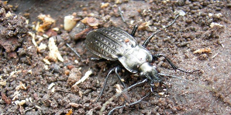 Misto insetti