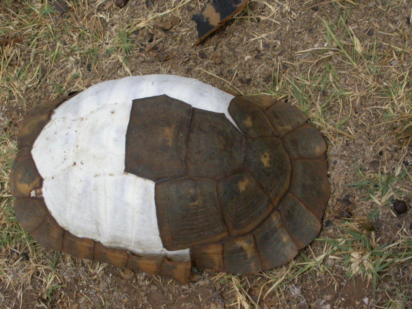 La valle delle tartarughe forum natura mediterraneo for Laghetto per tartarughe fai da te