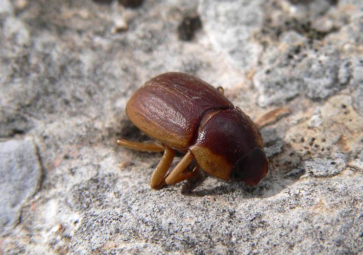 Qualche insetto sicano