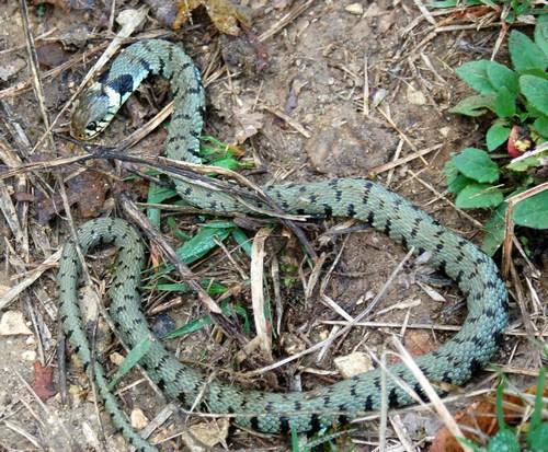 Serpente in casa yahoo dating