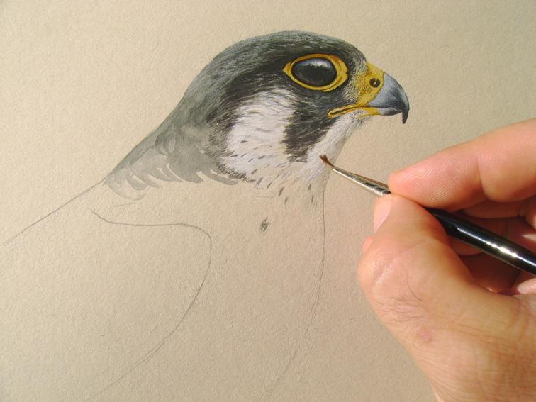 Disegnare gli uccelli corso di disegno naturalistico - Semplici disegni di uccelli ...