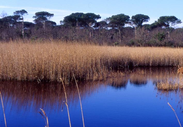 Flora delle dune