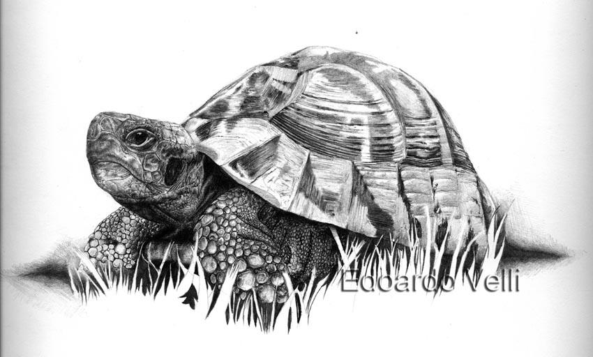 Disegnare Animali Matita Migliori Pagine Da Colorare