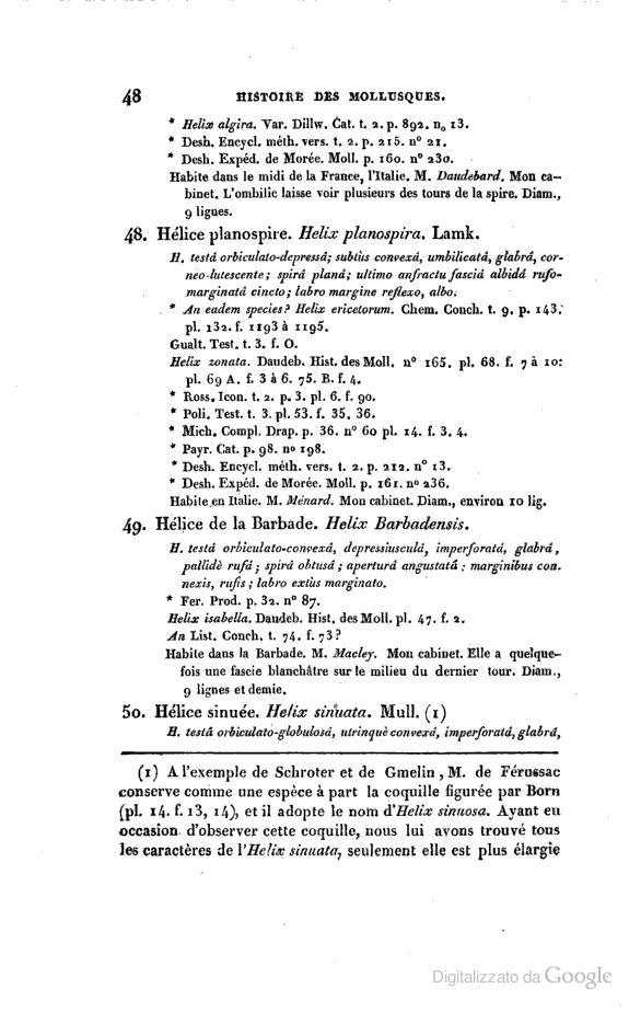 Chilostoma (Campylaea) planospira (Lamarck, 1822)