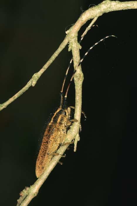 coleotteri nel  parco Foglino Nettuno