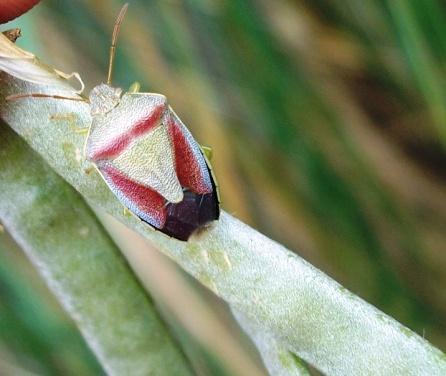 Qualche insetto palermitano
