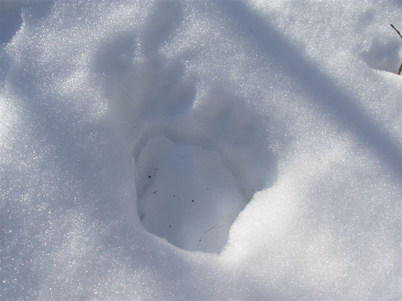 Sulla neve e grosse