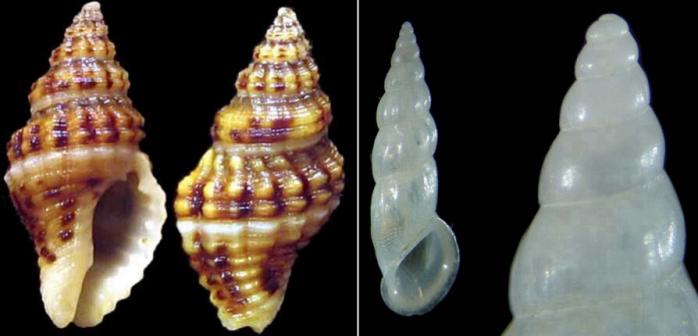 Note sui post dei molluschi da determinare