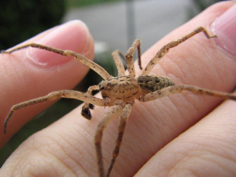 I ragni sono pericolosi forum natura mediterraneo for Piani di progettazione domestica con foto