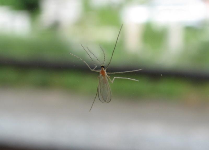 Tre insetti