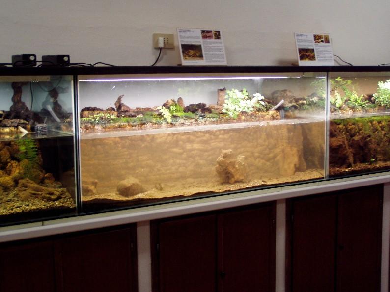 I terracquari del centro di entomologia piombino li for Acquario per tartarughe