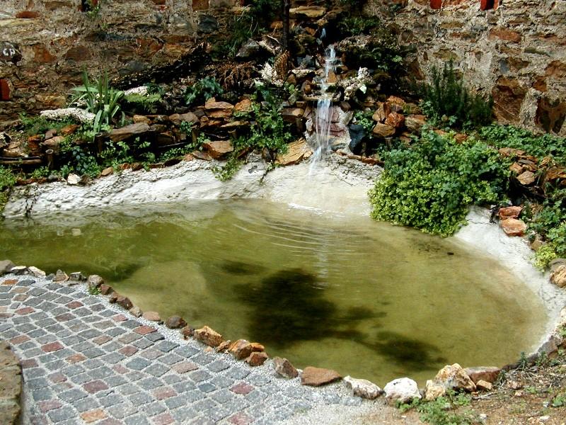 Il laghetto del centro di entomologia piombino li for Laghetto alghe