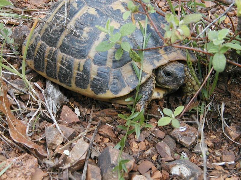 Aiuto recinto tartarughe di terra forum natura for Terra per tartarughe di terra
