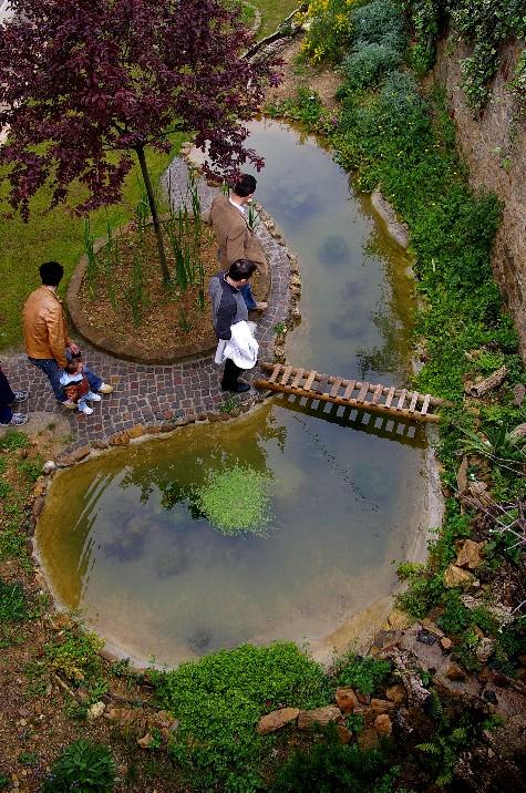 Il laghetto del centro di entomologia piombino li for Immagini di laghetti artificiali