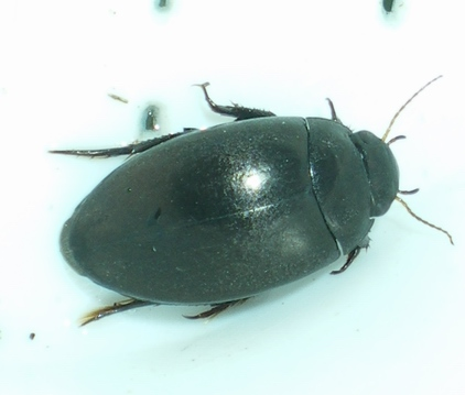 Domenica erpeto-entomologica