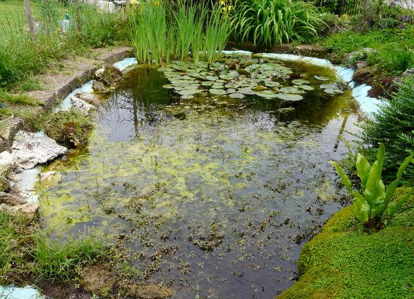 laghetti artificiali per anfibi forum natura