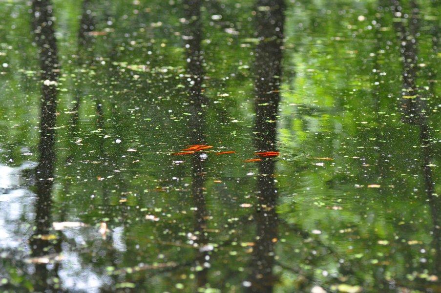Pesci rossi nello stagno della valletta del silenzio vi for Pesci rossi piccoli