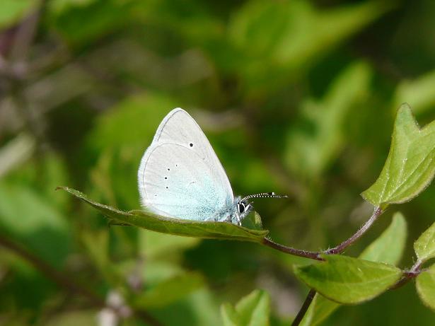 Farfalle ......
