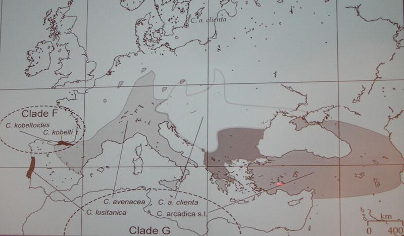 Chondrina megacheilos (Cristofori & Jan 1832) - un riassunto