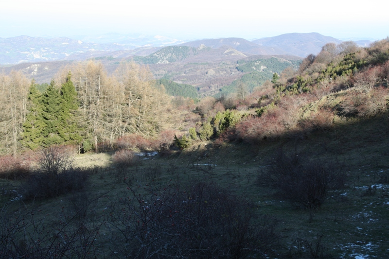 http://www.naturamediterraneo.com/Public/data7/gabrielebesostri2/5.JPG_20091210195821_5.JPG