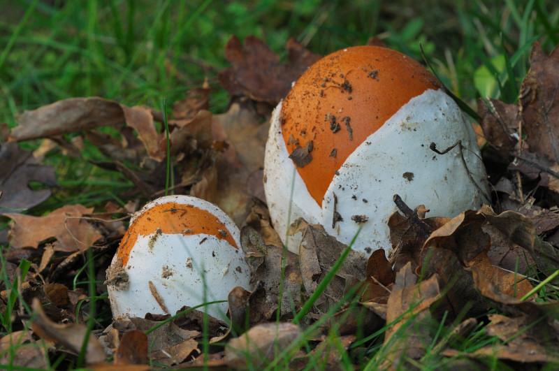 La formalina il fungo trattata