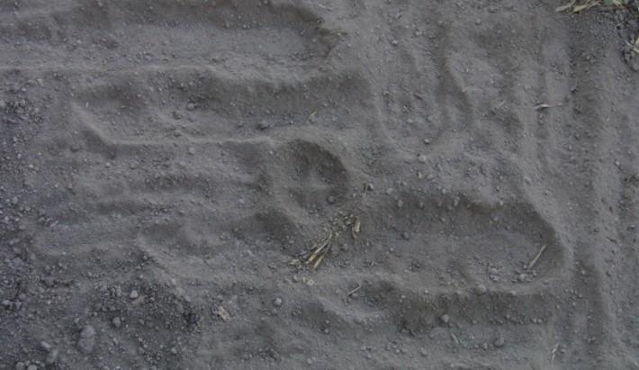 Impronte di volpe e cane, chiarimenti