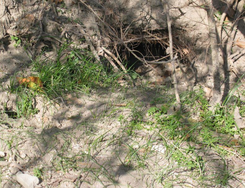 Tracce della presenza dell''istrice