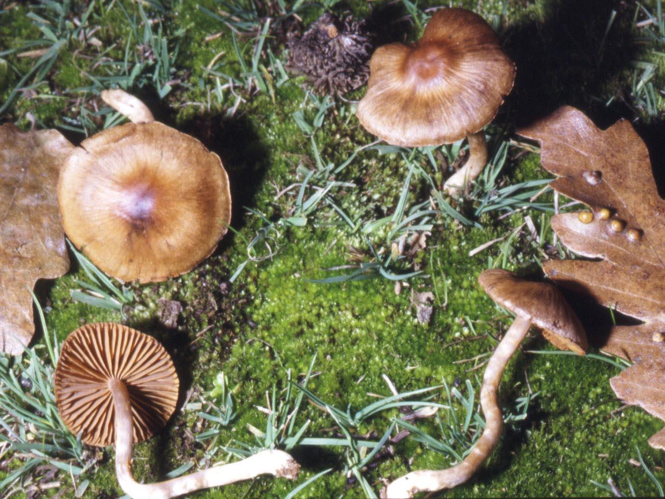 Posizione di fungo e suola