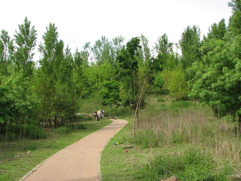 Parco degli Aironi (Varese) (vari artropodi)