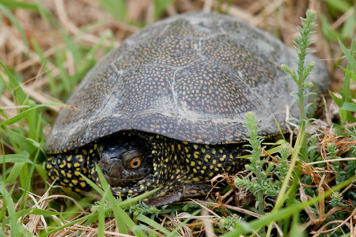 Che tartaruga forum natura mediterraneo forum for Che tipo di prestito puoi comprare terra
