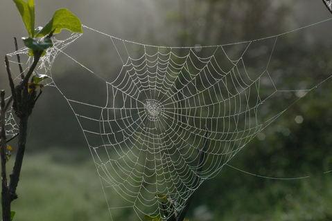 Nuova galleria : ragnatele