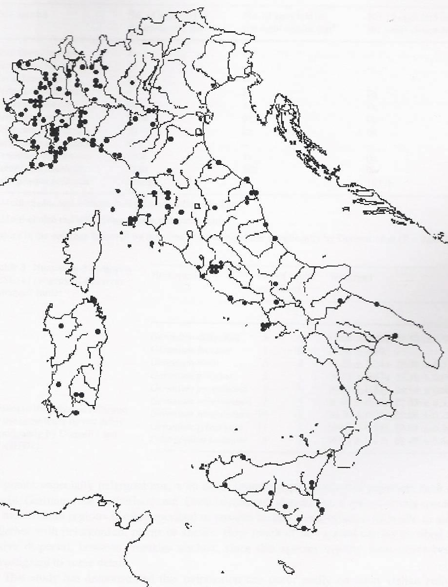 Cacyreus marshalli forum natura mediterraneo forum - Immagini da colorare delle montagne ...