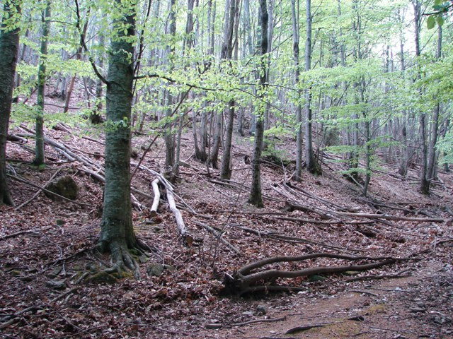 Limax aldrovandi Moquin-Tandon 1855 in valle Orsigna (PT)