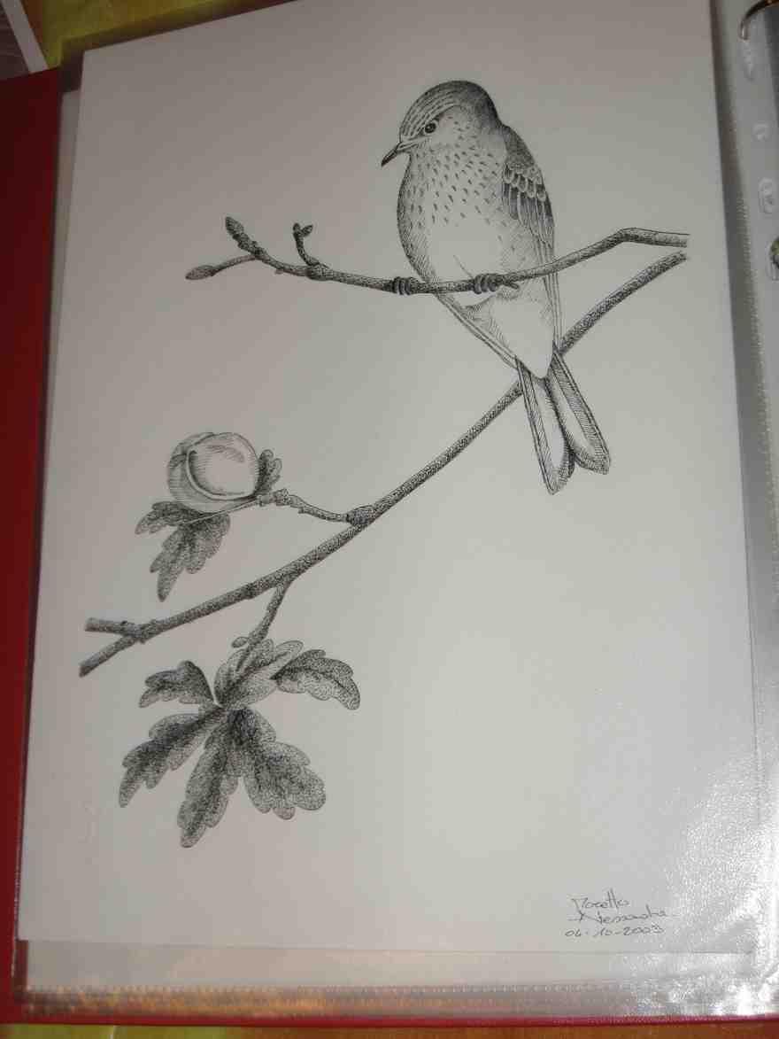 Altri disegni di animali forum natura mediterraneo for Disegni a matita di cani