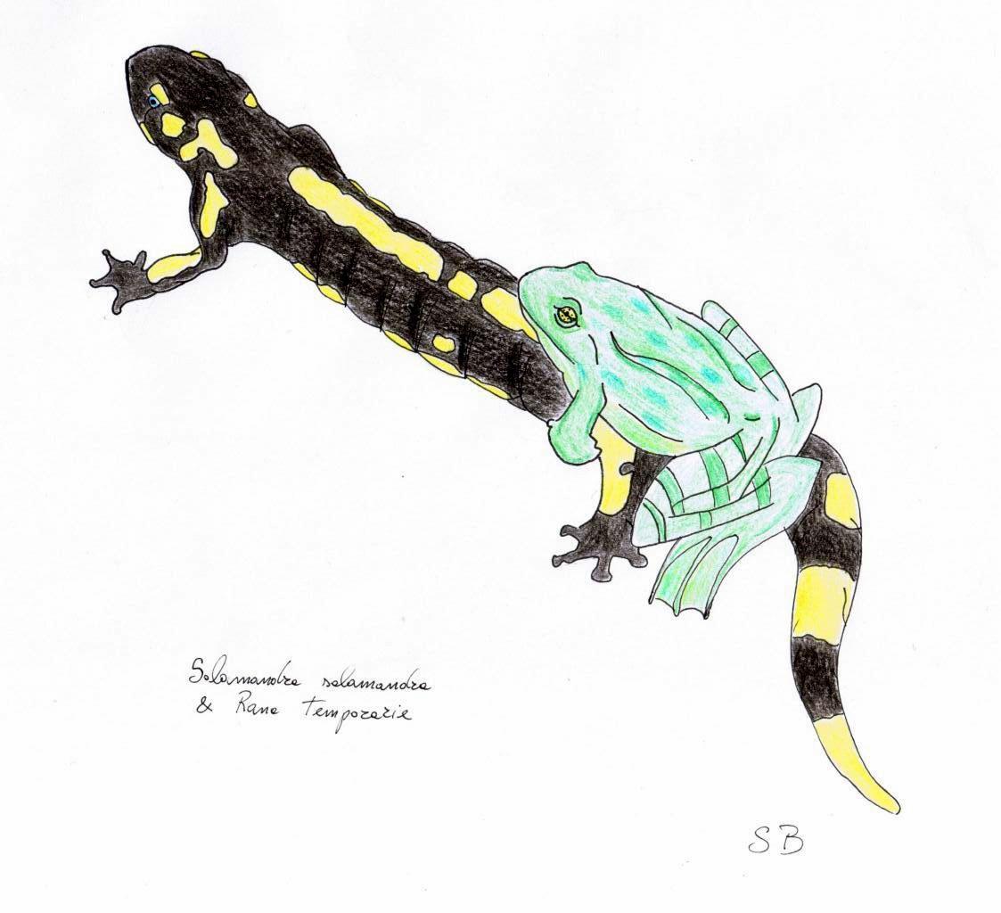 Neofita (disegno a matita)