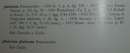 Arianta chamaeleon (Pfeiffer, 1868)