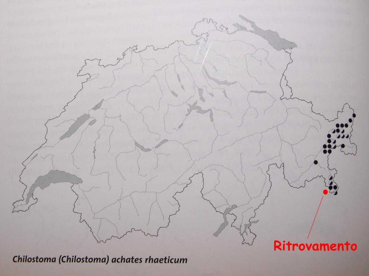 Chilostoma achates raethicum (Strobel, 1857)