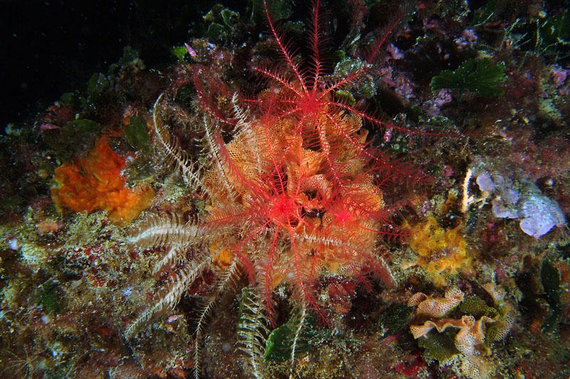 I mille colori di antedon mediterranea forum natura - Immagine di terra a colori ...