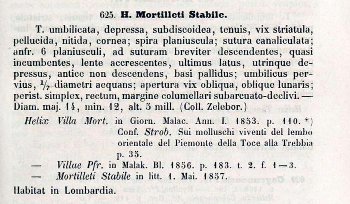 Oxychilus polygyrus (Pollonera, 1885)