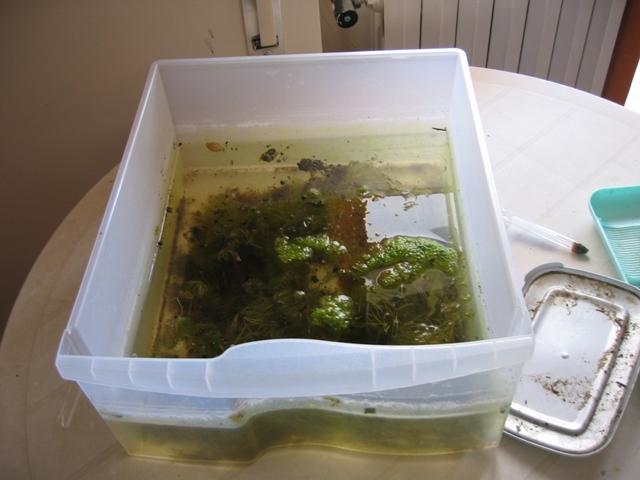 113 51 kb qualunque cosa capita alla terra capita anche for Vaschette tartarughe